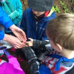 Kids observing a rough-skinned newt